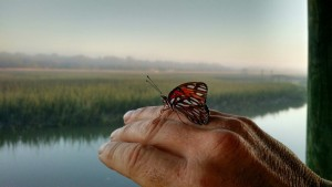 tims-picture-hand-butterfly
