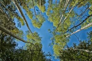 treescm