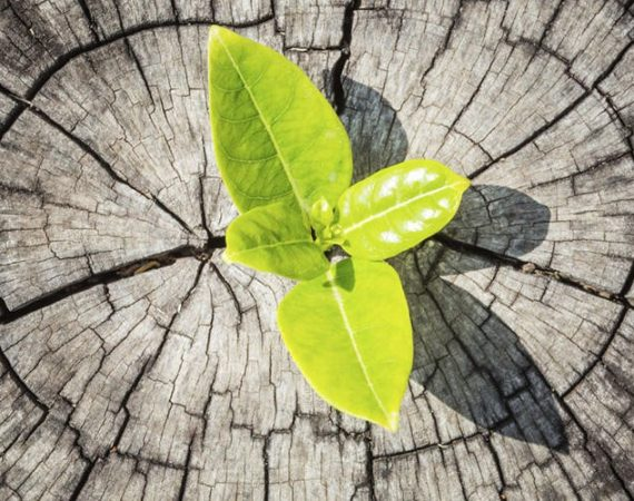 As Things Fall Apart – What Is The Opportunity?